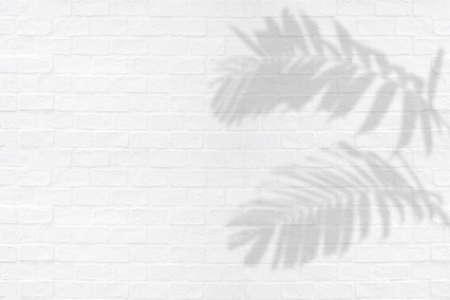 Tropical palm leaves ornamental foliage plant shadows on white brick wall texture background. Фото со стока