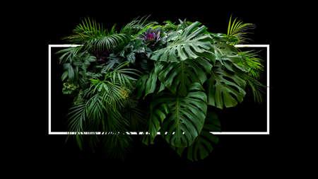 Tropical leaves foliage jungle plant bush foral arrangement nature backdrop with white frame on black background. Фото со стока