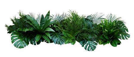 Green leaves of tropical plants bush (Monstera, palm, fern, rubber plant, pine, birds nest fern) floral arrangement indoors garden nature backdrop isolated on white background, clipping path included. Фото со стока