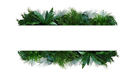 Green leaves nature frame layout of tropical plants bush (Monstera, palm, ferns, rubber plant, pine, birds nest fern) foliage floral arrangement on white background Foto de archivo
