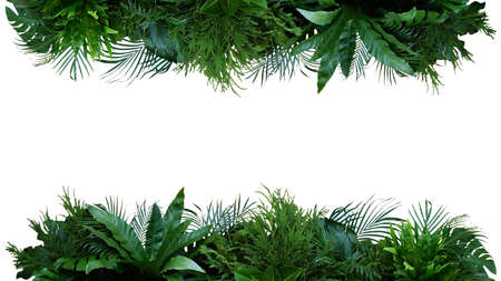 Green leaves of tropical plants bush (Monstera, palm, ferns, rubber plant, pine, birds nest fern) foliage floral arrangement  nature frame backdrop isolated on white background