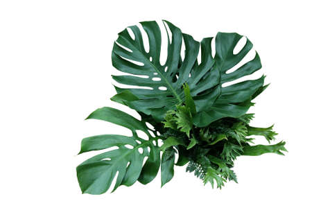 Tropical green leaves forest plant Monstera, ferns, and climbing bird's nest fern foliage plants floral bunch for wedding and ceremony decoration isolated on white background Foto de archivo