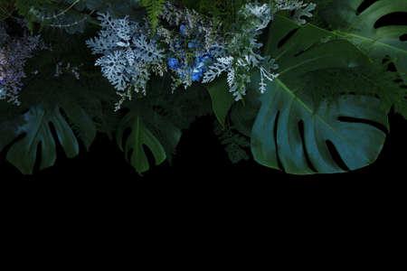 Flower arrangement nature backdrop of tropical foliage plants bush Monstera, Asparagus fern, eucalyptus, Dusty Miller silver plant leaves and blue flowers hydrangea on black background.
