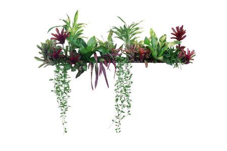Tropical plants bush decor (hanging Dischidia, Bromeliad, Dracaena, Begonia, Bird's nest fern) indoor garden houseplant nature backdrop, vertical garden wall planter  on white,  .