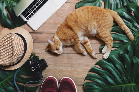 Work from home burnout, remote working and work life balance concepts with cat lying down in front of laptop computer on rustic wood background with tropical leaf Monstera, hat, camera and sport shoes