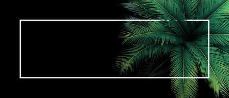 Tropical leaves pattern nature frame layout of top view green leaves Japanese Sago palm tree the foliage cycad palm plant on black background with white frame.