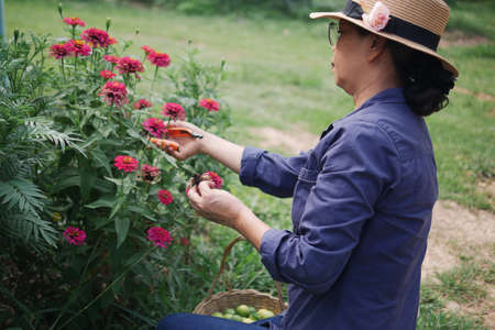 Asian senior woman wearing glasses and hat pruning plants and flowers in home garden, plant care concepts.