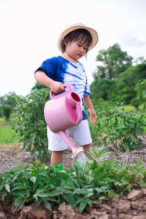 Three years old Asian preschool girl watering plants in home vegetable garden using pink small watering can, plant care concepts.