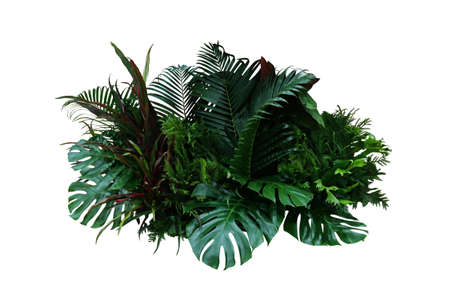 Tropical foliage plant bush (Monstera, palm leaves, Calathea, Cordyline or Hawaiian Ti plant, ferns, and fir) floral arrangement indoors garden nature backdrop isolated on white with clipping path. Imagens