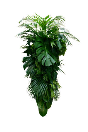 Tropical leaves foliage plants bush (Monstera, palm, rubber plant, pine, fern and philodendron leaves) floral arrangement indoors vertical garden nature backdrop isolated on white