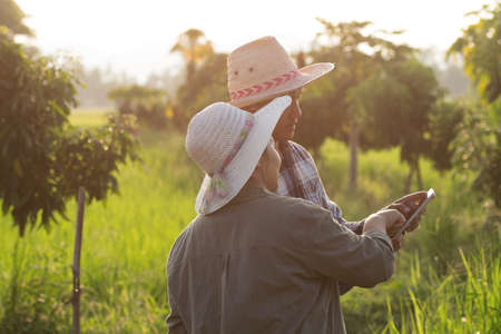 Asian young smart farmer couple using digital tablet monitoring and  managing organic farm in sunset light trees background. Modern technology smart farming agriculture and sustainability concepts. Imagens