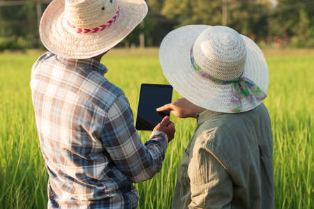 Rear view of young smart farmer couple using digital tablet monitoring and  managing rice field organic farm. Modern technology smart farming agriculture and sustainability concepts.