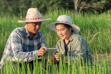 Asian young smart farmer couple using digital tablet monitoring and  managing rice field organic farm. Modern technology smart farming agriculture and sustainability concepts.
