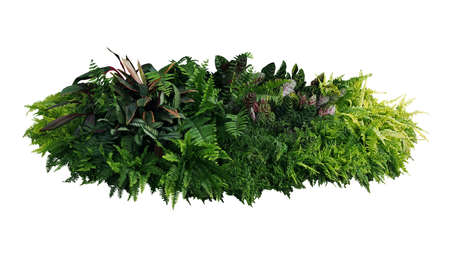 Green and variegated leaves of tropical foliage plants bush with various types of ferns, Calathea peacock plant, and Ti plant. Tropical garden nature backdrop isolated on white with clipping path.