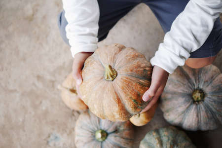 Child boy hands picking up pumpkin from organic farm market for Halloween decoration and cooking.