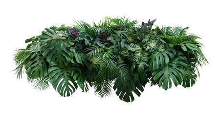 Tropical leaves foliage plant jungle bush floral arrangement nature backdrop with Monstera and tropic plants palm leaves isolated on white background