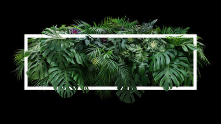 Tropical leaves foliage jungle plant bush floral arrangement nature backdrop with white frame on black background.