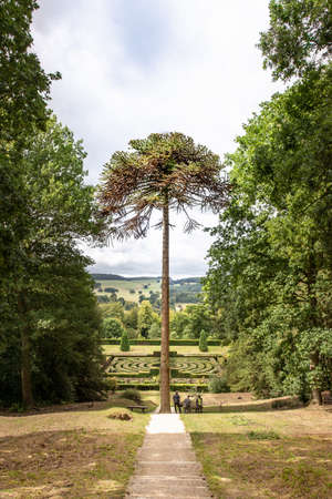 Loneley tree at Chatsworth Garden Banque d'images - 125068815