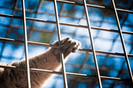 A monkey hands in a cage