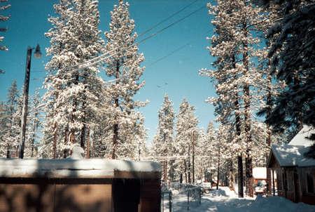 Snow Covered Trees  Winter Cabin Фото со стока