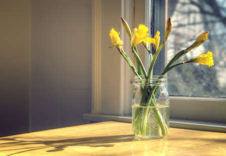 mason: Daffodils in glass mason jar Stock Photo