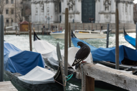 venice the most beautiful city in the world Stock Photo