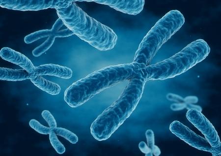 3 D レンダリング X 染色体