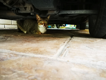 The cat is under the car in the garage.