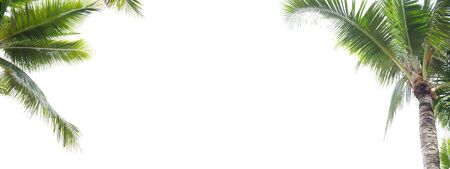 Panorama of coconut leaf frame isolate on white background with copy space, Summer concept.