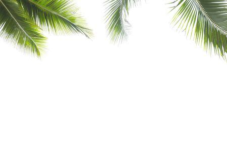 Coconut leaf frame isolate on white background whit copy space, Summer concept. Stock Photo
