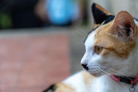 Close up portrait orange cat is sit on a concrete floor outside the house.