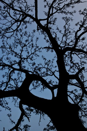 radiated: the silhouette of dead tree with radiated Texture in Winter night