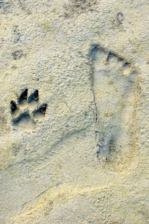 The Human and dog footprints Side by side on Sandy beach photo
