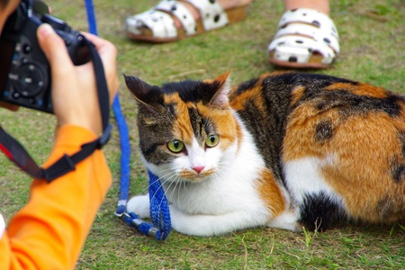 taking pictures of the Lovely cat on Lawn
