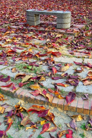The Landscape of Stone bench and red Fallen leaves at Autumn