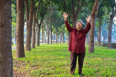 treelined: A Happy doing gymnastics old woman under the Tree-lined