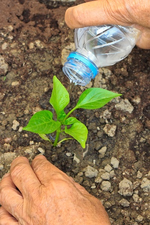 The Irrigation of Green seedling with Water