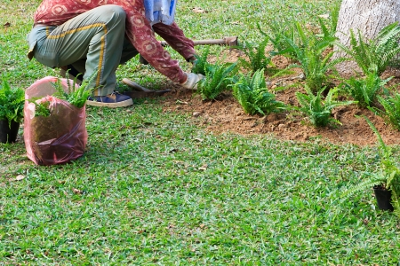 The gardener who Planting on Lawn