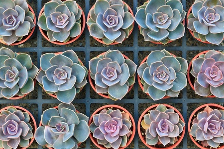 analogous: Arranged Analogous potted plants in flower pots on sale Stock Photo