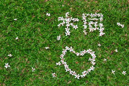 The tung blossom on the lawn with Arranged Pattern Stock Photo