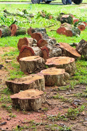 lumbering: The Lumbering projects with cutting tree and Sawdust