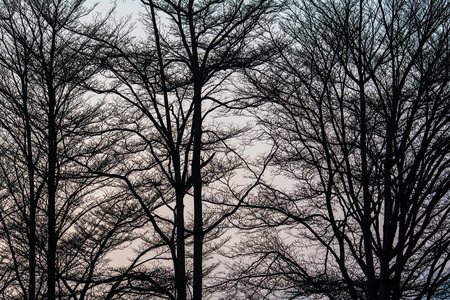 somber: Silhouette of Deciduous trees in Somber Sky Stock Photo