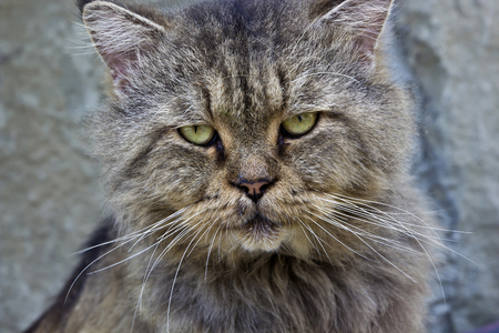 facial features: Facial features of a Pet cat with Interesting Expression