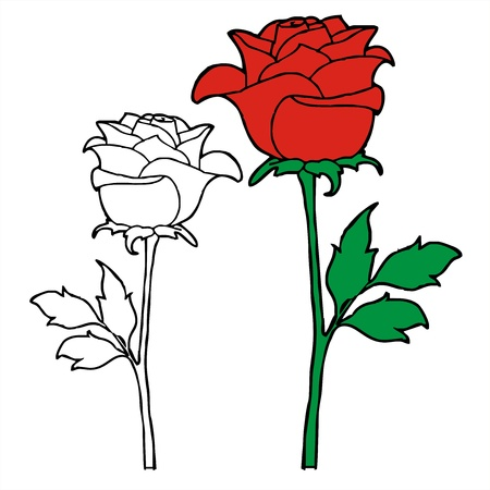 panicle: rose sketch vector