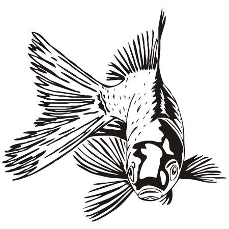 inflar: croquis esbozo goldfish Vectores