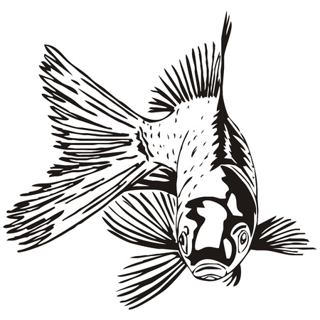 breezy: goldfish outline sketch
