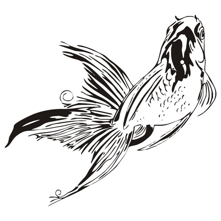 fortunate: scud goldfish outline sketch