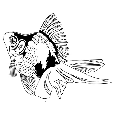 breezy: swiming goldfish outline sketch  Illustration