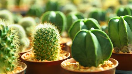 nurseries: Cactus plant nurseries