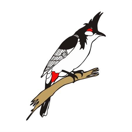 Vecteur d'oiseau Bulbul Rouge à moustaches Banque d'images - 23269843